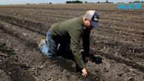 Current California Drought Will Cost Agirculture Sector Almost $2 Billion