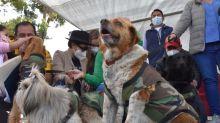 La residencia presidencial boliviana tiene ocho huéspedes de cuatro patas