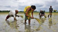 Slump in rice demand, weaker rupee drag India rates lower
