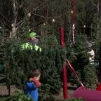 Bay Area farms say people are buying Christmas trees earlier