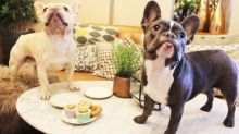 A French bulldog café is coming to London
