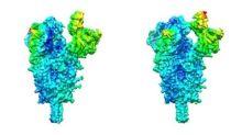 El CSIC revela la flexibilidad de la proteína que facilita el contagio de SARS-CoV-2