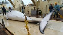 International call for Japan to halt Antarctic whaling