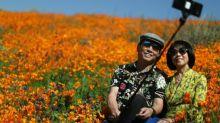 Rare super bloom stuns visitors