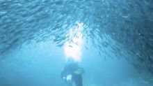 Man films divers' encounter with giant school of fish while exploring shipwreck