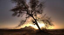 Descubren más de 1000 millones de árboles en el desierto del Sahara, pero no como te imaginas