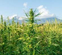 PAOG and PURA Announce Free Hemp Seed Giveaway To Promote CBD and Hemp Awareness