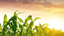 Grains Move Lower as Dollar Gains Traction
