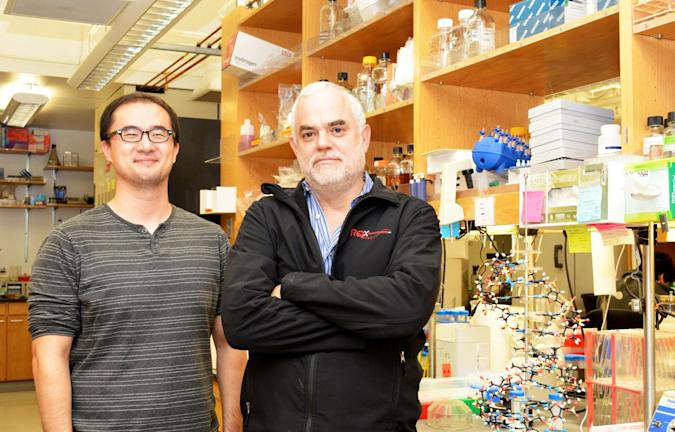 Scripps' York Zhang and Prof. Floyd Romesberg. Madeline McCurry-Schmidt/Scripps Research Institute