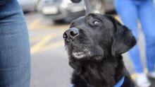 O cãozinho que mudou a vida de um adolescente autista