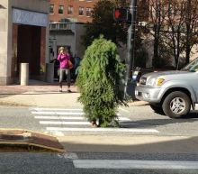 Person dressed as a tree had an average Monday