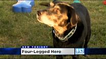 Local Dog Nominated For Humaine Society's Hero Dog Award