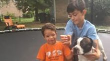Emotional Support Dog Missing for 3 Months Reunited with 4-Year-Old Boy