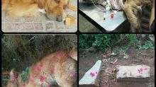 The sad state of abandoned pet dogs