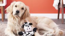 This Hear Doggy Flatty toy is only audible to pups — and it's 30 percent off for Cyber Monday!