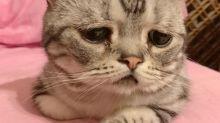 ¿Es este el gato más triste del mundo?
