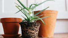 How To Repot A Plant Without Killing It, According To Green Thumbs
