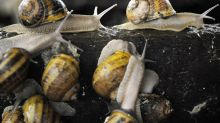 Snail Slime and Korean Flowers Are the Latest in Skin-Care Booms