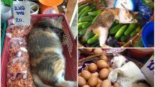 【相集】雜貨店喵星人瞓覺實錄 食物變枕頭責住瞓