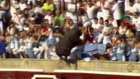 Enraged Bull Leaps into Stands