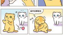 [貓奴的日常] 裝作沒事發生