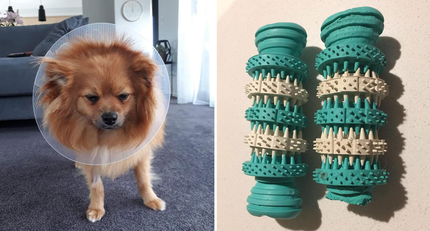 Dog's emergency surgery prompts warning over popular Kmart toy