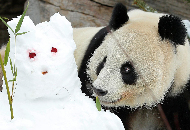 картинка со снеговиками и пандой