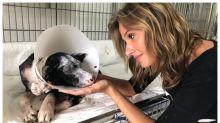 Luisa Mell celebra fim da comercialização de animais em pet: 'Era uma exploração sexual'