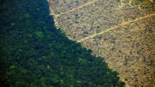 人類大肆伐林 2019年原始雨林被毀面積約同瑞士