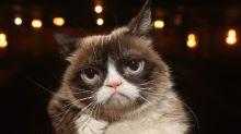 Internet Sensation Grumpy Cat Has Died