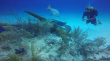 Are Cruise Ships Destroying Coral Reefs in the Cayman Islands?