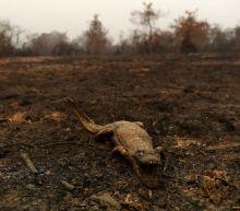Bolsonaro plays down Amazon fires, accuses NGOs of blocking land titling
