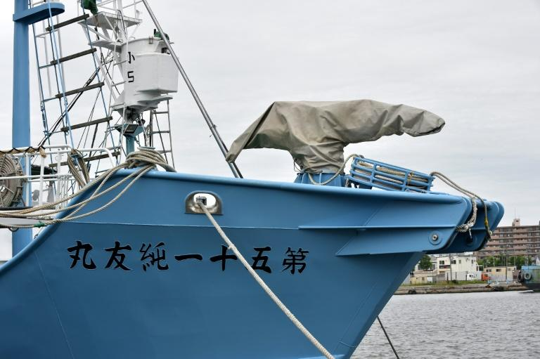 Japan whaling ships set sail for the first commercial hunts in over three decades, with their harpoons covered while in port