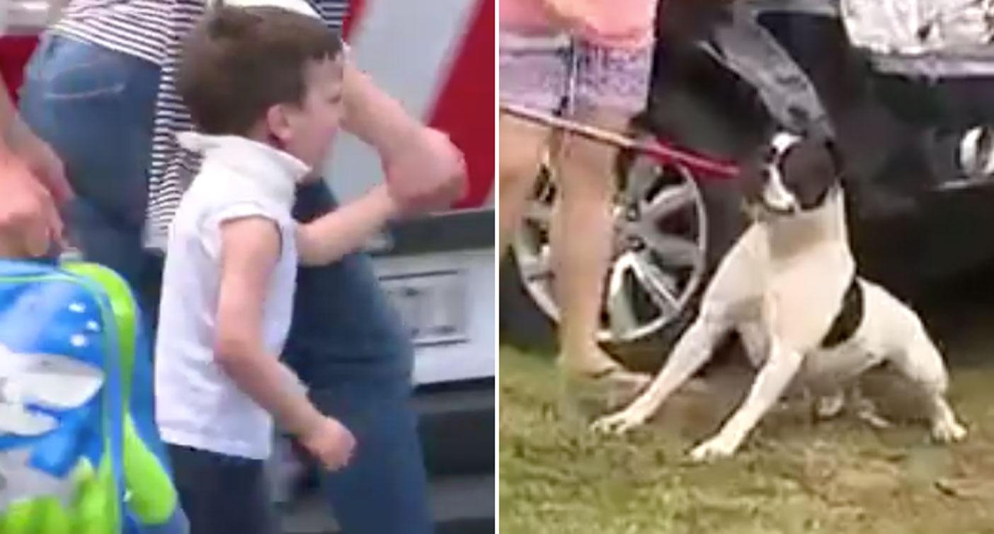 Boy, 4, lucky to be alive after being mauled by dog