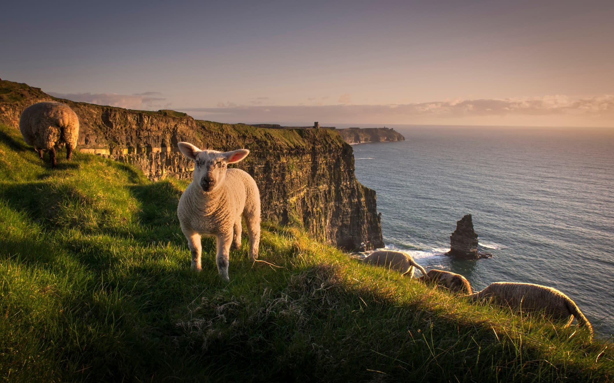 Ireland reveals lockdown exit strategy