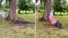 How an alligator was used in a truly bizarre gender reveal