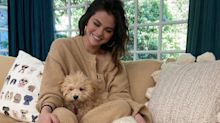 Selena Gomez looked super comfy with her puppies in a $170 sweater set
