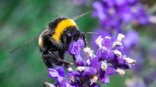 Weniger Licht und Gift für mehr Insektenschutz