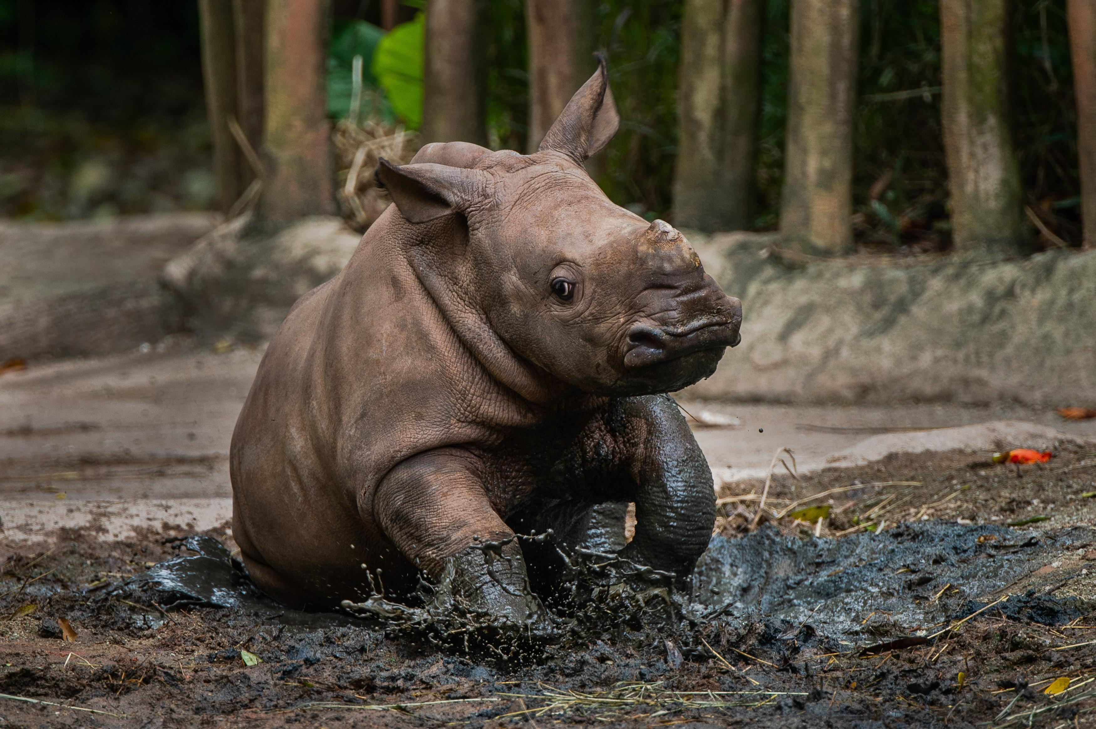 660 newborns welcomed at Singapore's wildlife attractions last year