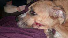 Saved: Stolen newborn puppies reunited with mother