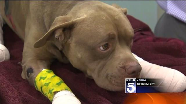Firecrackers Tied to Dog`s Legs Leaving Him Badly Burned