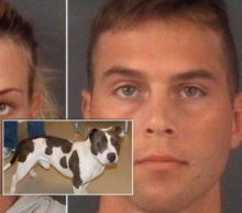 Army Veteran Tied Service Dog to Tree, Shot It 5 Times on Camera: Cops