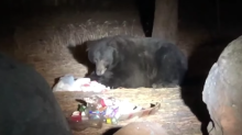 'You Gonna Clean It Up?': Officer Scolds Hungry Bear Chowing Down on Garbage
