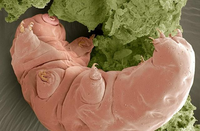 Scientists reanimate tiny frozen animals after 30 years