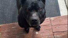 No ayudan a un perro perdido por su nombre 'racista'
