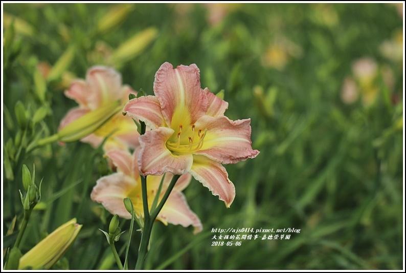 德嘉德萱草園-2018-05-45.jpg