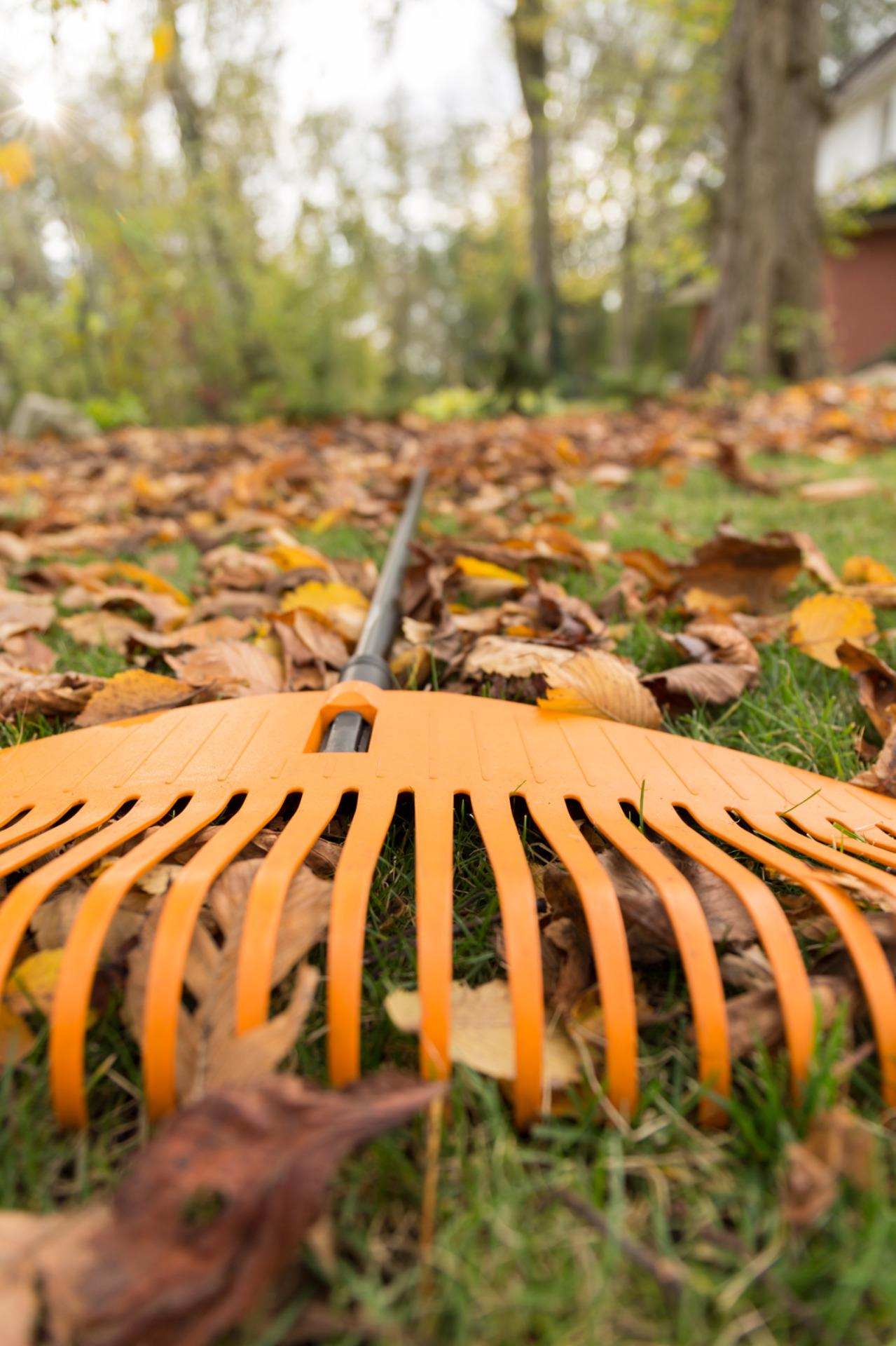 """<p>Good news for all who dread the endless chore of leaf removal: Raking has just been declared overrated, harmful, and all-around terrible by the <a href=""""http://www.nwf.org/"""" rel=""""nofollow noopener"""" target=""""_blank"""" data-ylk=""""slk:National Wildlife Federation"""" class=""""link rapid-noclick-resp"""">National Wildlife Federation</a>. <i>(Photo: Thinkstock)</i><br></p>"""