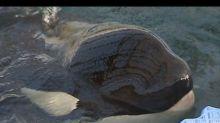 In Russia orientale scoppia lo scandalo delle prigioni delle balene