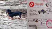 El más tierno manual de instrucciones para cuidar al perro elaborado por una niña