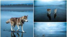 【相集】俄羅斯雪橇狗「輕功水上飄」 結冰湖上步行Twitter熱傳